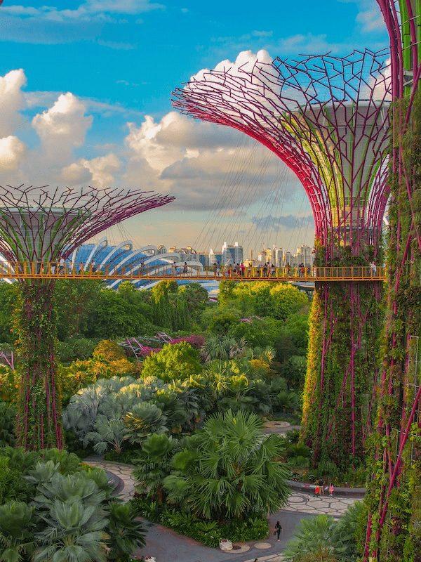 バイオフィリック デザイン シンガポール