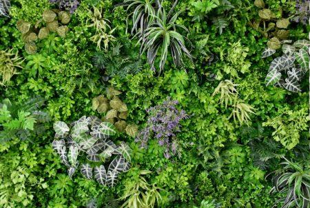 壁面緑化 冬