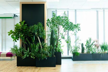 グリーンオフィスプロジェクト 植物生活×ヒキダシグリーンカンパニー